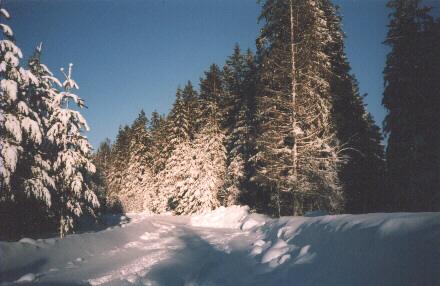 Iblukse mets